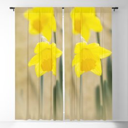 Two yellow narcissus flowers Blackout Curtain