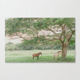 Vieques, Puerto Rico Canvas Print