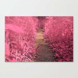 Windy Goose Creek Trail - Tickle Me Pink Canvas Print