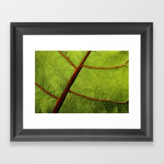Leaf Veins II Framed Art Print