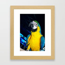 The most colored bird Framed Art Print