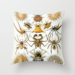 Haeckel Illustration Spiders Throw Pillow