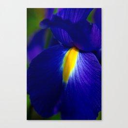 Blue Passion Canvas Print