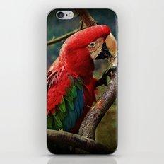 Roter Ara iPhone & iPod Skin