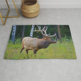 Bull Elk shows off his rack in Jasper National Park Rug