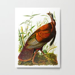 Wild Turkey Metal Print