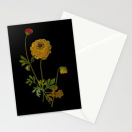 Ranunculus Asiaticus by Mary Delany Paper Collage Floral Flower Botanical Paper Mosaic Vintage Scientific Plant Anatomy Stationery Cards