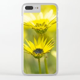 The beauty of yellow daisies Clear iPhone Case