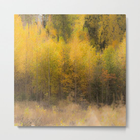 Fall color forest Metal Print