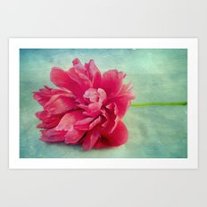Peony on Blue Art Print