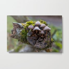 The mushroom family Metal Print