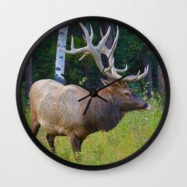 Bull Elk shows off his rack in Jasper National Park Wall Clock