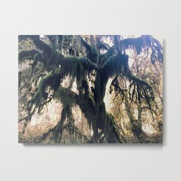 Hall of Moss Metal Print