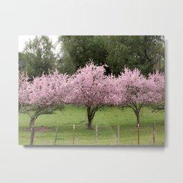 Cherry Blossoms on Mount Hamilton Metal Print