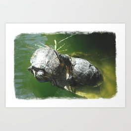 Turtle Love Art Print
