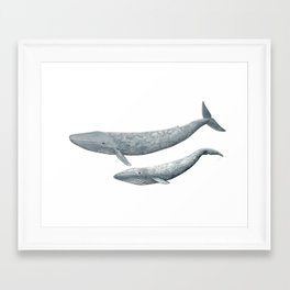 Blue whales (Balaenoptera musculus) - Blue whale Framed Art Print