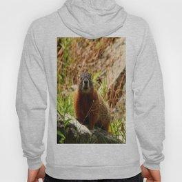 Marmot On A Rock Hoody