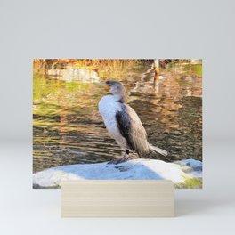 CORMORANT JUVENILE - FACING LEFT Mini Art Print