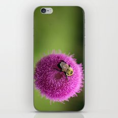Bumble Bee on Purple Thistle iPhone & iPod Skin