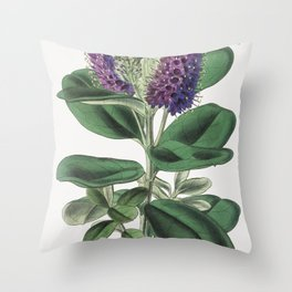 Veronica Speciosa (1843) by Walter Fitch Throw Pillow