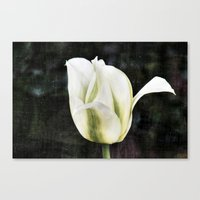 tulip Canvas Prints featuring Tulip by Christine baessler