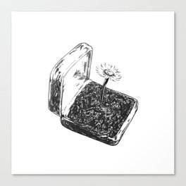 Daisy in a box Canvas Print