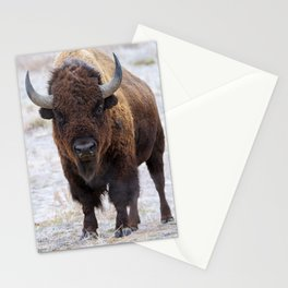 In The Presence Of Bison 2  Stationery Cards