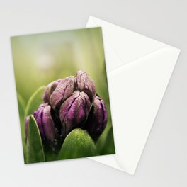 Hyacinths in Dew Stationery Cards