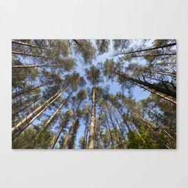 autumn mixed forest Canvas Print