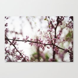 The Pinker the Better Canvas Print