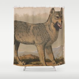 Vintage Illustration of a Gray Wolf (1874) Shower Curtain