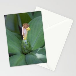 Painted spiral Ginger flower Stationery Cards