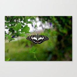Butterfly Small Canvas Print