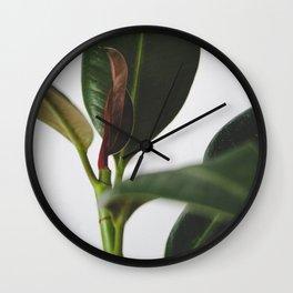 Ficus elastica Wall Clock
