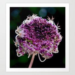 field carmine flower Art Print