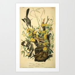 Northern mockingbird Art Print
