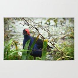 Swamp Hen - Porphyrio porphyrio melanotus Rug