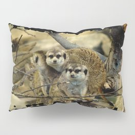 African Meerkat Trio Pillow Sham