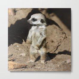 Cute Meerkat Metal Print