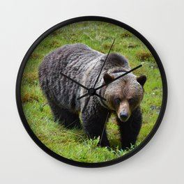 Grizzly bear in Jasper National Park Wall Clock