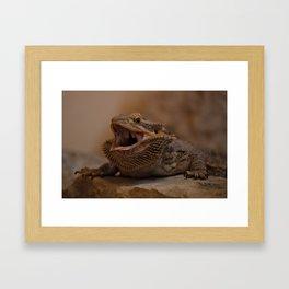Hissing Bearded Dragon Framed Art Print