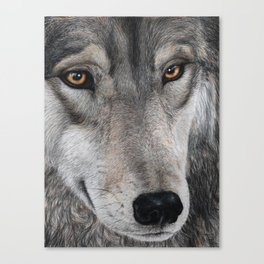 Wolf Drawing Canvas Print