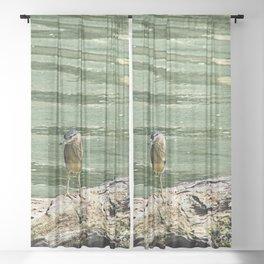 Young Grey Egret Wading Bird Driftwood River Sheer Curtain