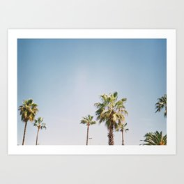 Palmtrees in Barcelona Europe | Blue Sky, Green Palm Trees Tropical vibe Art Print