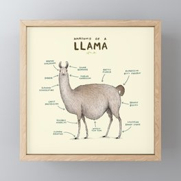 Anatomy of a Llama Framed Mini Art Print