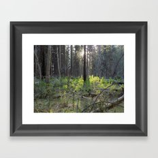 Yosemite Morning Framed Art Print