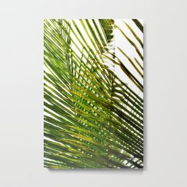 coconut leaves blades sky view on yellow green foliage Metal Print