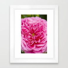 Pink Rose Garden (Macrophotography) Framed Art Print