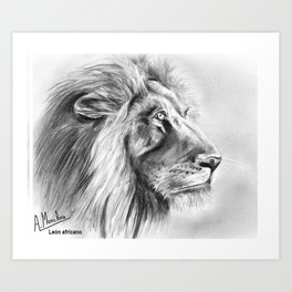 León africano Art Print