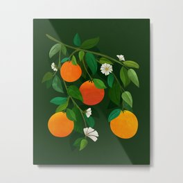Oranges and Blossoms / Botanical Illustration Metal Print